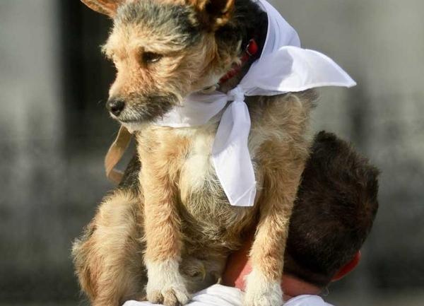 Un perro a hombros de su dueño.